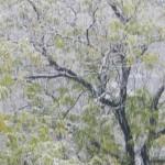 Snjag v Plovdiv